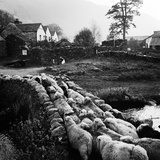 Watendlath, Borrowdale, Cumbria, a Drove of Sheep Passing over Watendlath Packhorse Bridge Photographic Print by John Gay