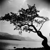 A Windswept Tree Silhouetted Against Bright Sunlight, Growing on the Rocky Shore of a Calm Lake Photographic Print by John Gay