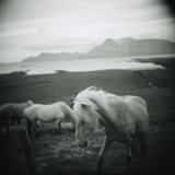 Horses in Pasture Photographic Print