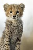 Gepardenbaby Fotografie-Druck