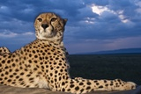 Cheetah Lying on Top of Safari Truck Photographic Print
