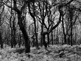Woodland Photographic Print by Peter Williams