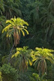 Palm Trees Along Zambezi River Photographic Print