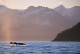 Humpback Whale Surfacing in Aialik Bay Photographic Print