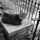 A Tabby Cat Sitting on the Top of a Gatepost Looking Warily at the Camera Photographic Print by John Gay