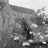 Boxgrove Priory, West Sussex, a View of a Tabby Cat Sat on a Chest Tomb Overgrown with Grasses Photographic Print by John Gay