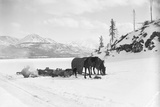 Horses and Sledge in the Klondike Photographic Print