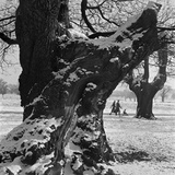 Richmond Park, London Photographic Print by John Gay