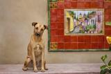 Pet Dog, Baja, Mexico Photographic Print