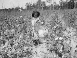 Young Cotton Picker Photographic Print