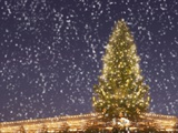 Christmas Tree under Snowfall Photographic Print
