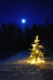 Small Christmas Tree Against Silhouette Trees and Full Moon Lámina fotográfica