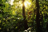 Tropical Rainforest in Panama Photographic Print