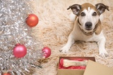 Dog with Present by Christmas Tree Photographic Print