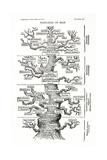 Tree of Life from the Evolution of Man Giclée-tryk af Ernst Haeckel