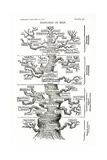 Tree of Life from the Evolution of Man Gicleetryck av Ernst Haeckel
