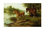 A Mare and Her Foal Giclee Print by Basil Bradley