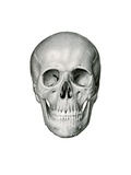 Anterior or Frontal View of Human Skull Giclee Print