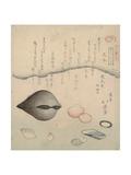 Aragai, Masugai, Anagai: Clams Giclee Print by Totoya Hokkei