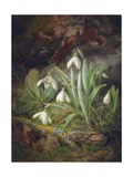 Forest Floor with Snowdrops Giclee Print by Josef Lauer