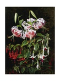Rubrum Lilies and Fucshias Giclee Print by Johan Laurentz Jensen