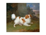 A Blenheim Spaniel Giclee Print by William Webb