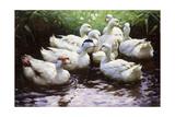 Ashore (Ducks) Giclee Print by Alexander Koester