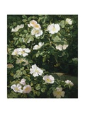 Dog Roses in Flower Giclee Print by Niels Peter Rasmussen