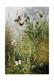 The Butterflies' Haunt (Dandelion Clocks and Thistles) Giclee Print by William Scott Myles
