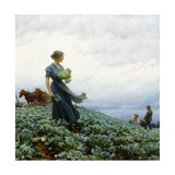 The Cabbage Field Giclee Print by Charles Courtney Curran