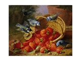 A Feast of Strawberries (Blue Tits) by Eloise Harriet Stannard Giclee Print by Eloise Harriet Stannard