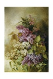 A Study of Lilac Giclee Print by Claude Massmann