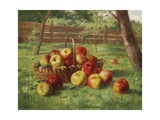 Apple Harvest Giclee Print by Karl Vikas