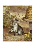 A Curious Kitten Giclee Print by Frank Paton