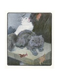 A White and Gray Persian Cat on a Park Bench in the Fall Giclee Print