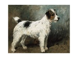 A Portrait of Nettle, a Terrier Giclee Print by John Emms