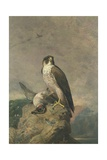 Peregrine and Teal Giclee Print by Archibald Thorburn