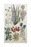 Botanical Print of Various Flowers Giclee Print by J. Hill