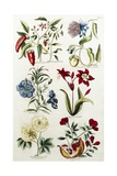 Botanical Print of a Variety of Flowers Giclee Print by J. Hill