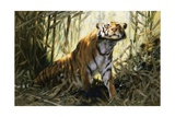 A Tiger with a Peacock Giclee Print by Wilhelm Kuhnert