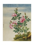 A Rose Chinese Watercolor Giclee Print