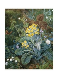 A Still Life of Polyanthus and Butterfly Giclee Print by Mary Margetts