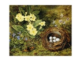 Primroses with a Bird's Nest Giclee Print by H. Bernard Grey