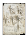 Drawing of the Muscles of the Spine Giclee Print by  Leonardo da Vinci