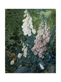 A Still Life of Foxgloves Giclee Print by Mary Margetts