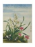 A Joss Flower, a Flower in Great Esteem Chinese Watercolor Giclee Print