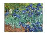 Íris Impressão giclée por Vincent van Gogh