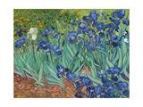 Lirios Lámina giclée por Vincent van Gogh