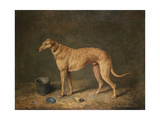 A Deerhound in a Stable Interior Giclee Print by James Barenger