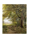 A Wooded Landscape with Foxgloves Giclee Print by Edmund George Warren